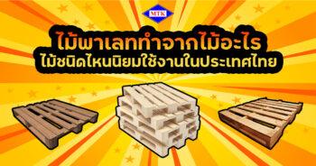 ไม้พาเลท ทําจากไม้อะไร ไม้ชนิดไหนนิยมใช้งานในประเทศไทย ?